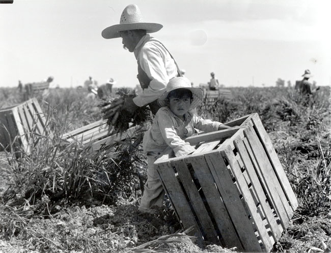 united farm workers and mexican americans 2 essay United farm workers is what i consider to be the first point in the push for mexican immigration this made most mexican americans unhappy and the.